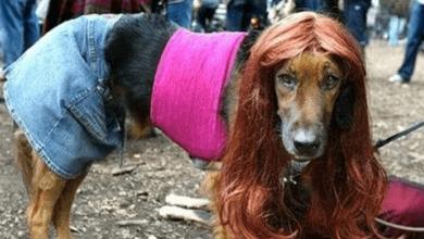 Photo of Вече и зоофилите искат права като хомосексуалистите